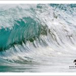 WAVE WARRIORS|2019-2020/FALL WINTERカタログがリリース